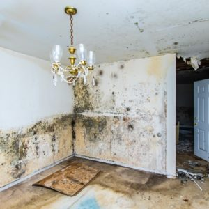 Extensive mold growth throughtout the walls and ceilings of a home